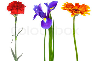 freshness beauty flowers on a white background