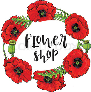 vector red poppy flower blooming template isolated illustration on