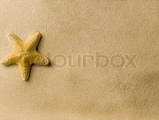 a sea star on the beach