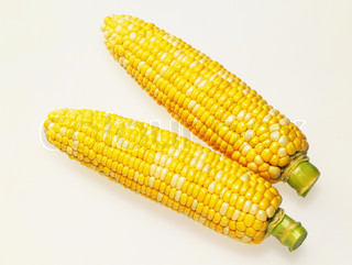 a pair of cooked corn cobs isolated
