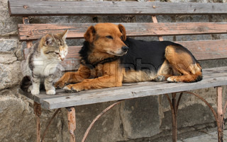 a cat and a dog are friends