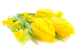 close-up of tulips and daffodils on white background