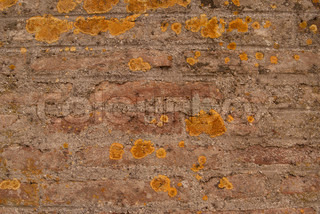 Old brick brown wall is closeup with yellow mould