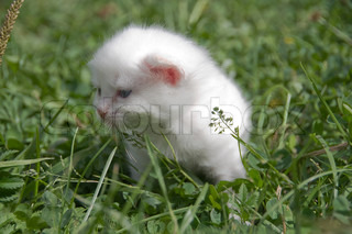 The small white kitten has lost the way in a grass