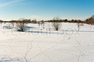 Winter landscape with wild animals tracks on snow