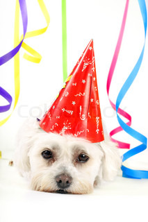 Small white dog with a party hat amongst colourful streamers