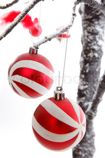 Pretty Christmas decorations hang from snow covered branches
