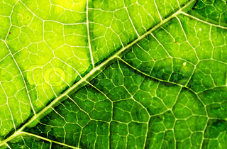 abstract leaf background generated by the computer