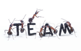 ants constructing word team with letters managing by chief, teamwork