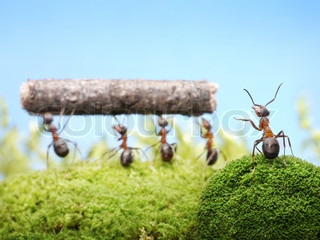 head ant managing teamwork