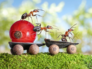 team of ants delivers red currant with trailer of sunflower seeds, teamwotk