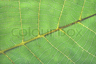 natural leaf background macro in the green color