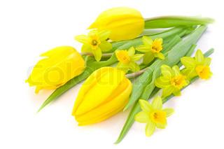 close- up af tulipaner og påskeliljer på hvid baggrund