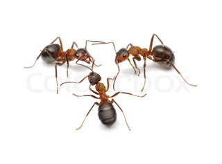 ants create network, connecting with antennas