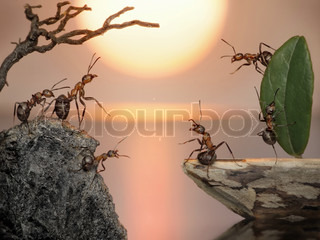 crew of ants sailing back home