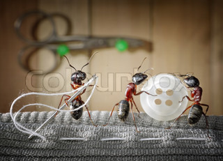 tailor ant and team of ants sewing wear with needle
