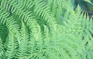 natural leaf background from the near forest