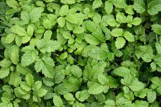frisk grøn baggrund fra de små blade