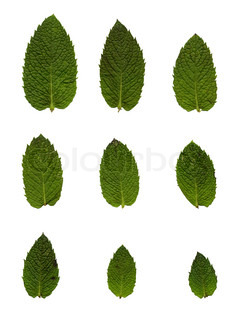 Green mint leafs isolated on white