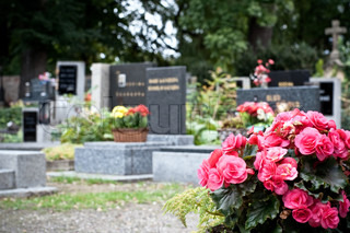 Pink begonia at a tombstone on the catholic cemetery
