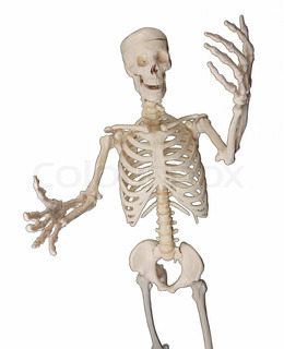 happy skeletal system isolated on white background