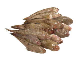 Heap of fresh fish isolated on a white background