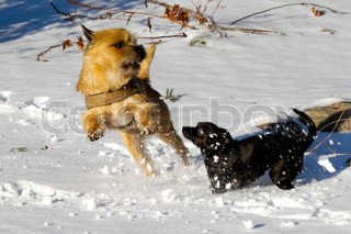 Dogs are playing and running in the snow