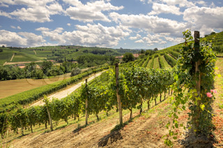 View on beautiful hills and vineyards of Piedmont, Northern Italy