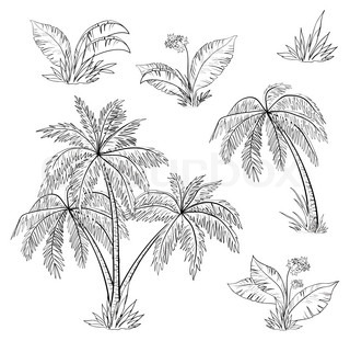 Palm trees, flowers and grass, monochrome contours on white background
