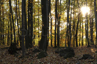 very nice autumn forest with the sun in the leaves