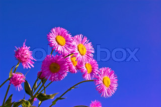 Pink flowers against the blue sky