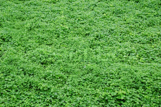 Natural green background consisting of several weeds