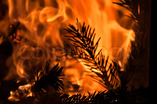 roaring fire with fir branches in fireplace