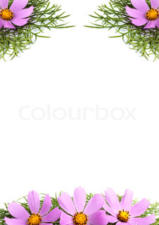Flowers without leaves isolated on white background