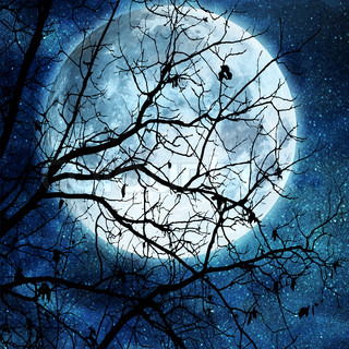 tree branches against full moon