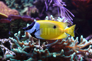 exotic fish as very nice aquarium background