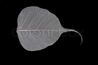 beatiful big leaf on the black background