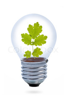 Light bulb with leaves inside