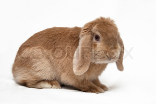Cute bunny isolated on background