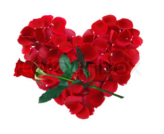 beautiful heart of red rose petals and rose flower isolated on white