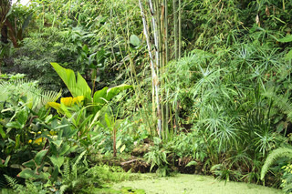 very nice natural green jungle with small lake