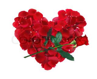smukke hjerte rød rosenblade og rose blomst isoleret på hvidt