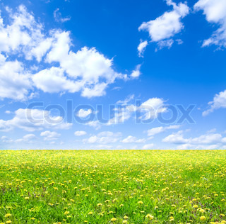 bright colors of summer day, special toned , focus point onnearest part of grass