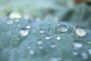 water drops on the green leaf natural background