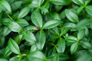 background of green leaves with bug