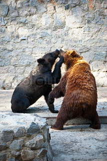 two fighting bears at the zoo