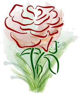 abstract rose on the white