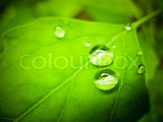 Water drops on green plant