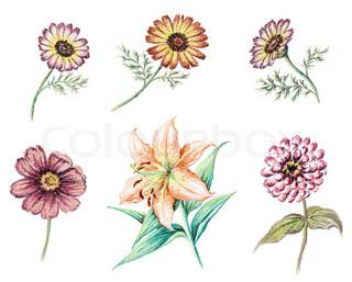 Picture , pastel , hånd -draw på hvidt papir : flowers chrysanthemum , kosmos, lilje og zinnia