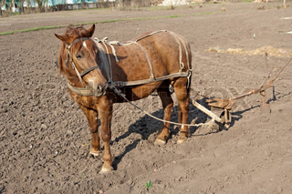 Horse with plow standing on the ground